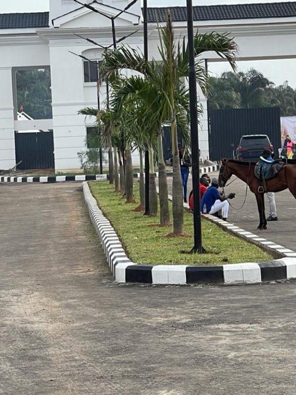 Lagos - horses